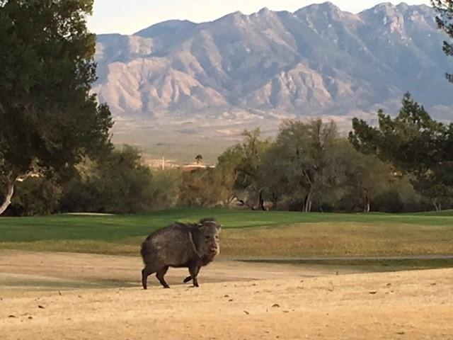 Private Golf Course, Green Valley Arizona-Desert Hills ...