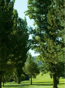 fairway-trees-vert.jpg