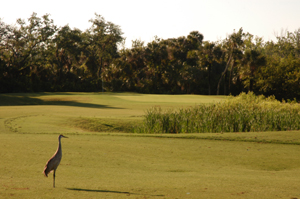 Baytree National Golf Hole 3 with Sandhill Crane Photo