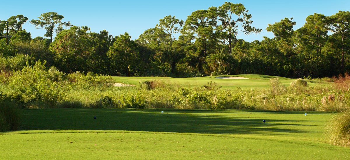 Photo Header Baytree National Hole 12 Tee Box and Green