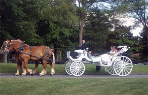 Photo - Bride on carriage ride